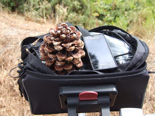 http://www.bratki.com/photos/Lazurka/DSCF5309.JPG