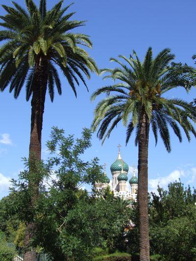 http://www.bratki.com/photos/Lazurka/DSCF6279.JPG
