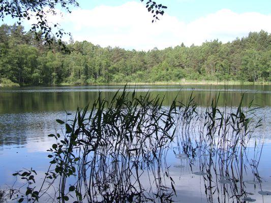 http://www.bratki.com/photos/VP-Poland/DSCF7477.JPG