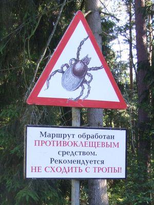 http://www.bratki.com/photos/VP-Poland/DSCF8381.JPG