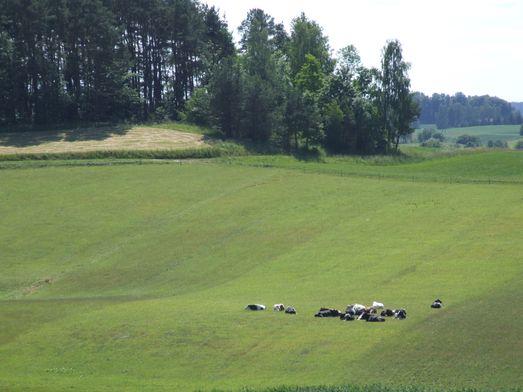 http://www.bratki.com/photos/VP-Poland2/DSCF9594.JPG